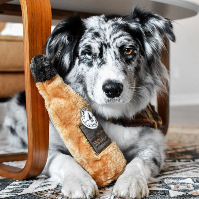Influencer Example - Pet Category
